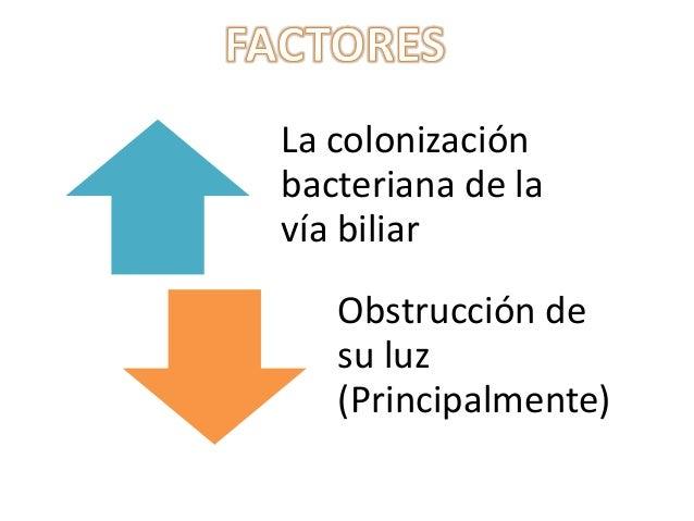 También puedeproducirse colonización                           Provoca la translocaciónbacteriana por siembra             ...