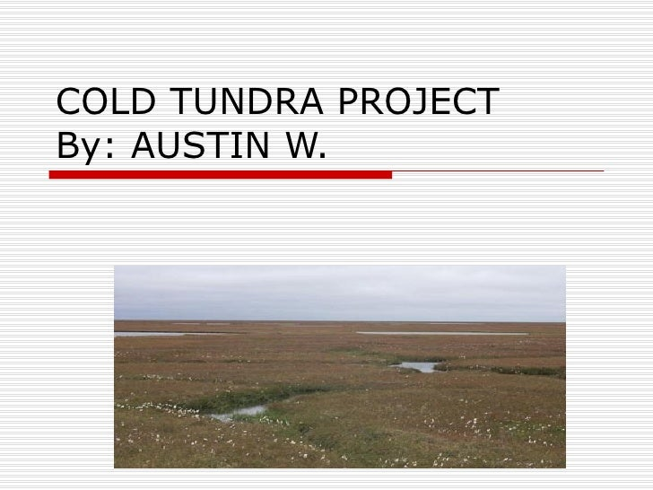 COLD TUNDRA PROJECT By: AUSTIN W.