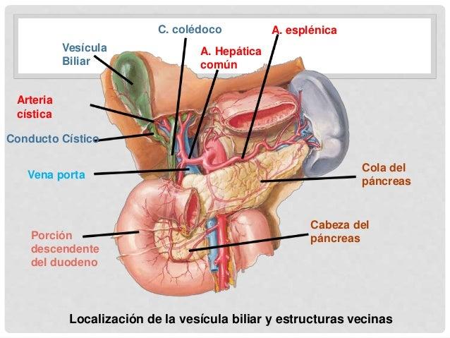 Colecistitis aguda y colelitiasis