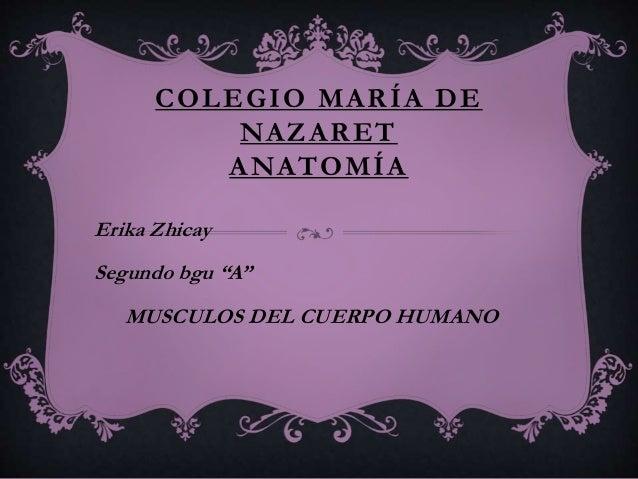 """COLEGIO MARÍA DE NAZARET ANATOMÍA Erika Zhicay Segundo bgu """"A"""" MUSCULOS DEL CUERPO HUMANO"""