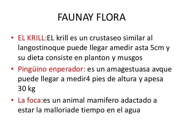 FAUNAY FLORA • EL KRILL:EL krill es un crustaseo similar al langostinoque puede llegar amedir asta 5cm y su dieta consiste...