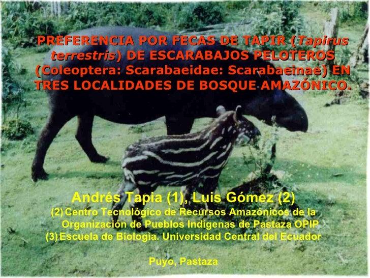 PREFERENCIA POR FECAS DE TAPIR ( Tapirus terrestris ) DE ESCARABAJOS PELOTEROS (Coleoptera: Scarabaeidae: Scarabaeinae) EN...
