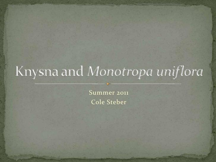 Summer 2011<br />Cole Steber<br />Knysnaand Monotropauniflora<br />