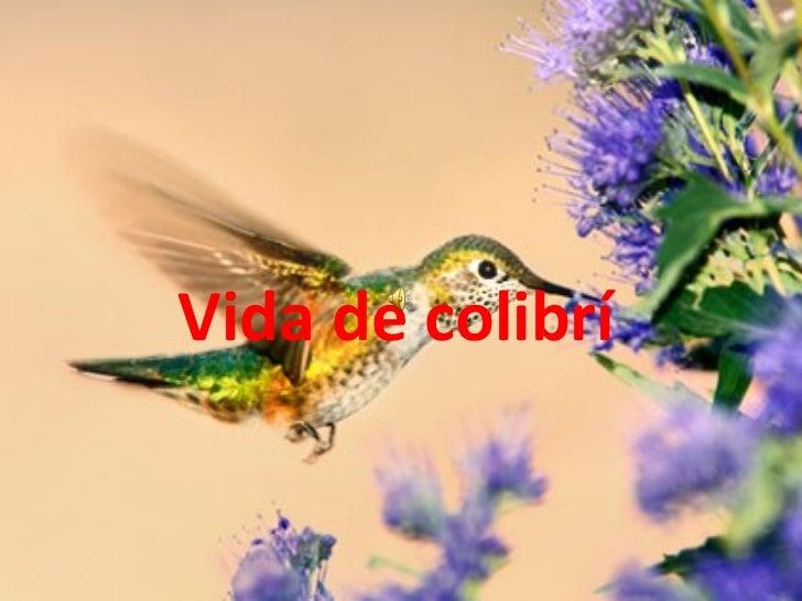 Vida de colibrí