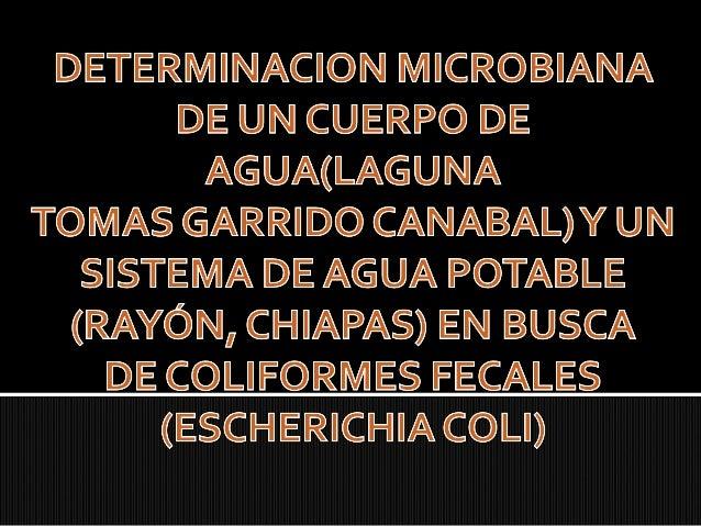 Determinar la presencia de Coliformes fecales en un cuerpo lagunar (Laguna de las Ilusiones Centro, Tabasco) y en un Siste...
