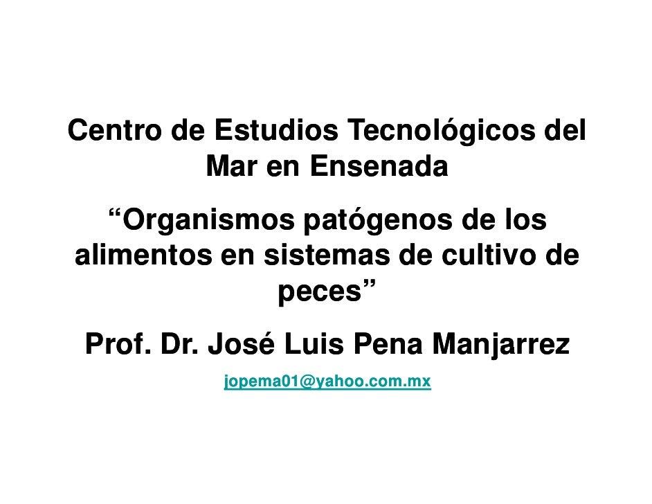 """Centro de Estudios Tecnológicos del          Mar          M en E Ensenada                        d    """"Organismos patógeno..."""