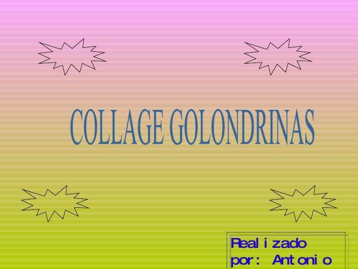 COLLAGE GOLONDRINAS Realizado por: Antonio