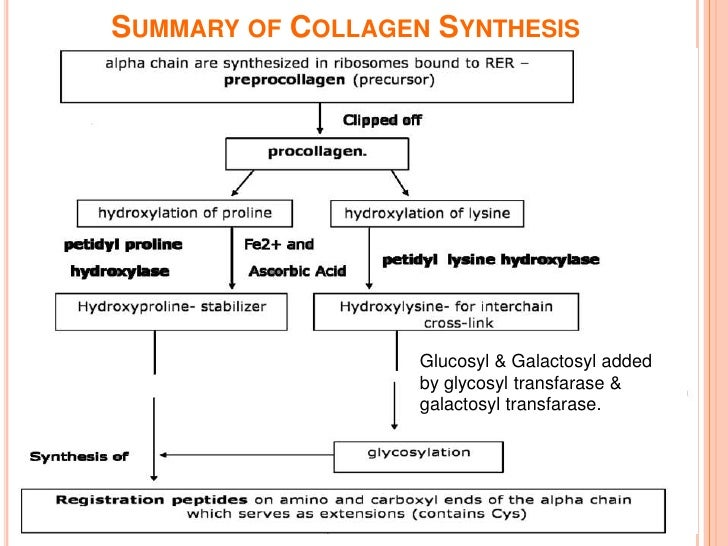 Collagen synthesis equipoise
