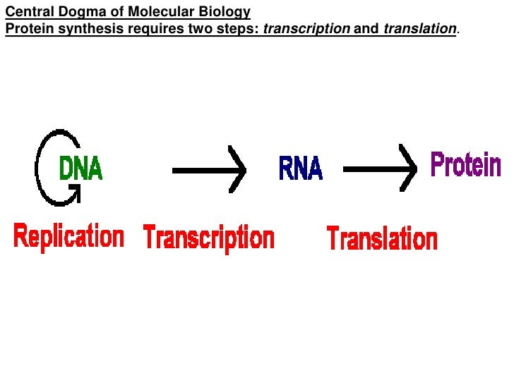 Protein synthesis process for dummies documenting quotes research paper