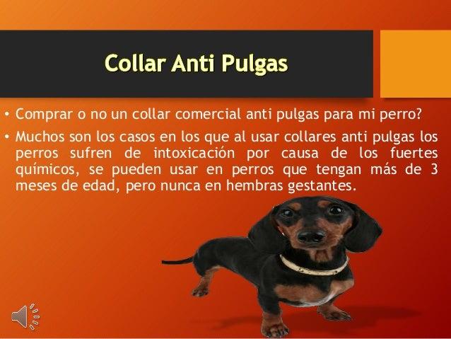 • Comprar o no un collar comercial anti pulgas para mi perro? • Muchos son los casos en los que al usar collares anti pulg...