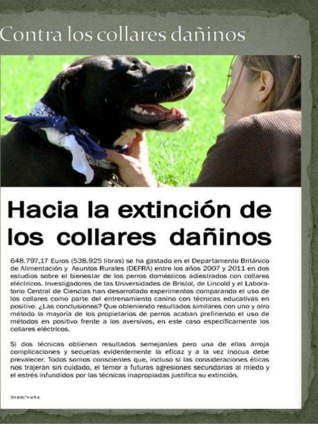 Contra los Collares dañinos - Emma infante Derecho animal y sociedad www.futuranimal.org