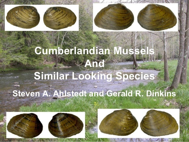 Cumberlandian Mussels               And     Similar Looking SpeciesSteven A. Ahlstedt and Gerald R. Dinkins