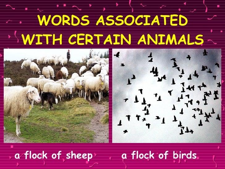 WORDS ASSOCIATED WITH CERTAIN ANIMALS <ul><li>a flock of sheep   a flock of birds  </li></ul>