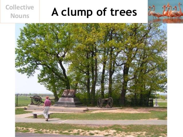 A clump of trees Collective Nouns