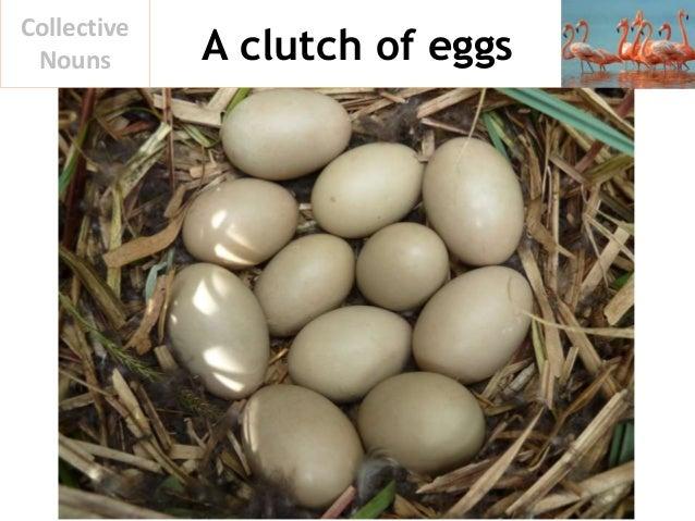 A clutch of eggs Collective Nouns