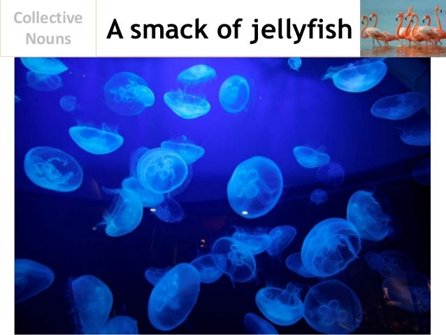 A smack of jellyfish Collective Nouns