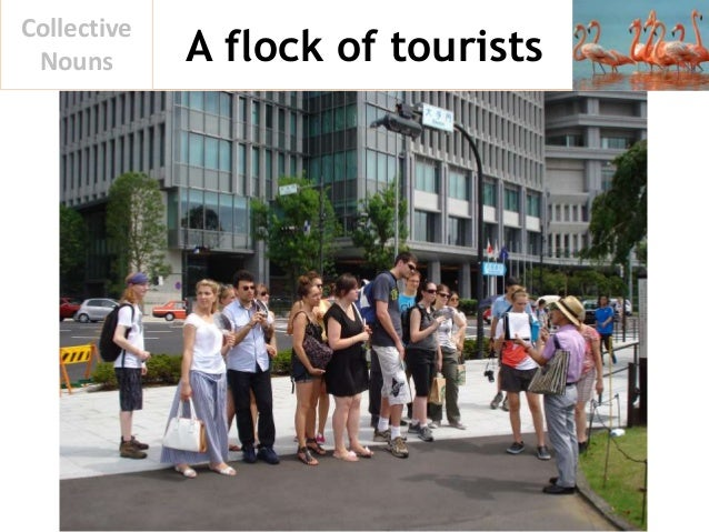 A flock of tourists Collective Nouns