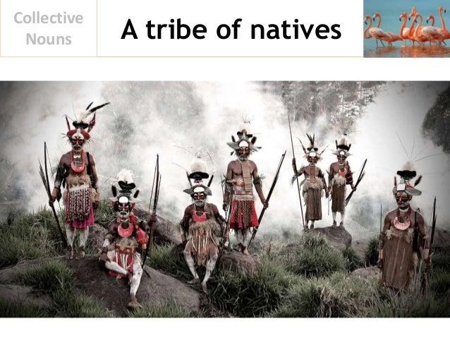 A tribe of natives Collective Nouns