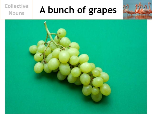 A bunch of grapes Collective Nouns