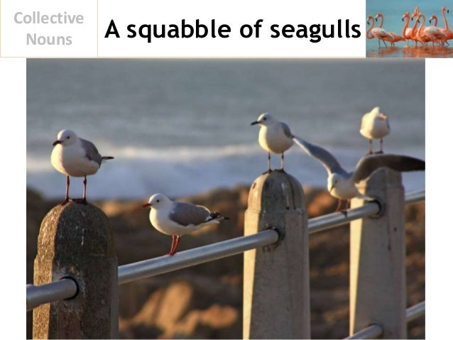 A squabble of seagulls Collective Nouns