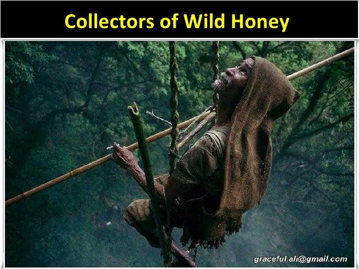 Collectors of Wild Honey