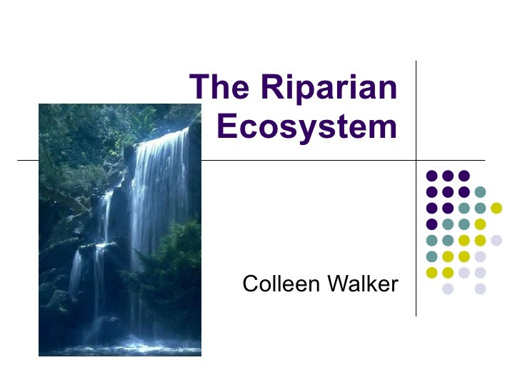 The Riparian Ecosystem Colleen Walker