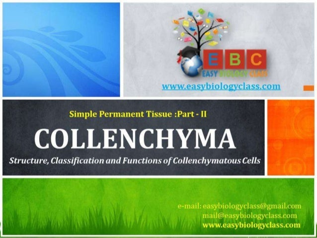 For detailed description of this topic, please click on: http://www.easybiologyclass.com/collenchyma-cells-in-plants-struc...