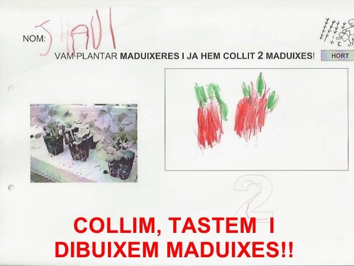 COLLIM, TASTEM  I DIBUIXEM MADUIXES!!