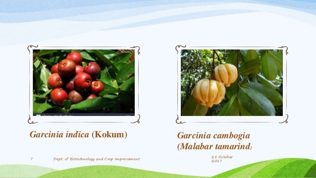 Garcinia essentials south africa price image 4