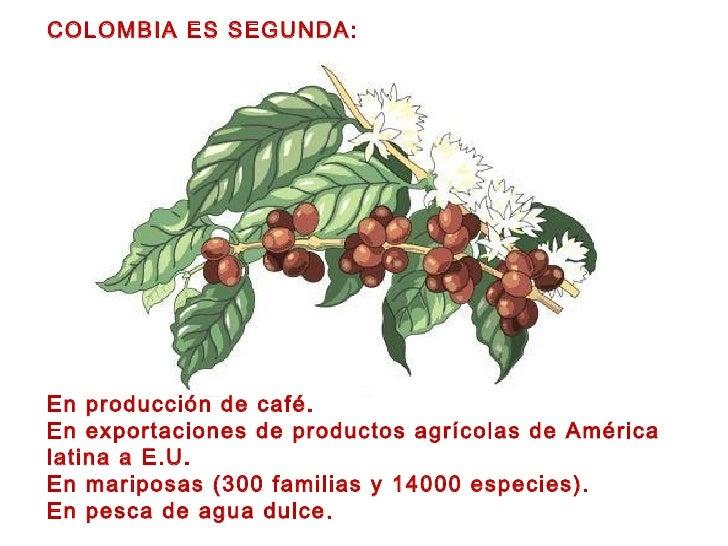 COLOMBIA ES SEGUNDA: En producción de café. En exportaciones de productos agrícolas de América latina a E.U. En mariposas ...