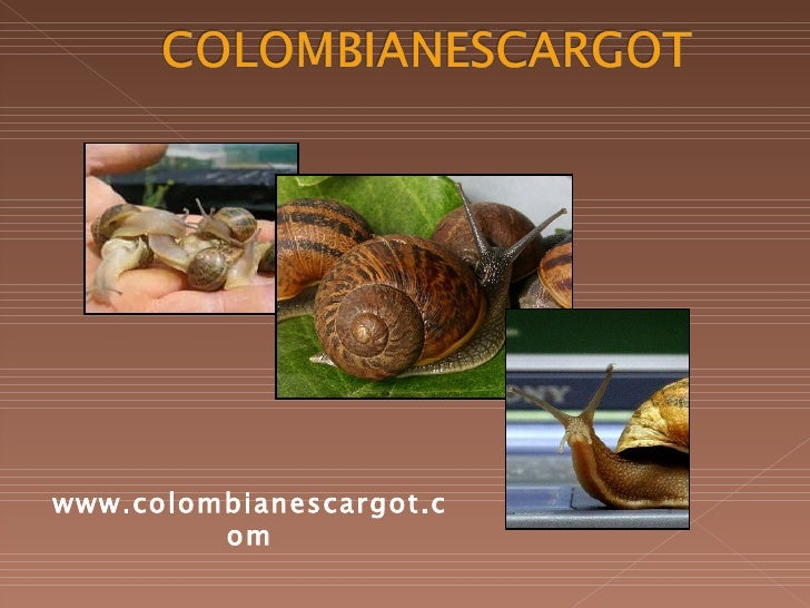www.colombianescargot.com