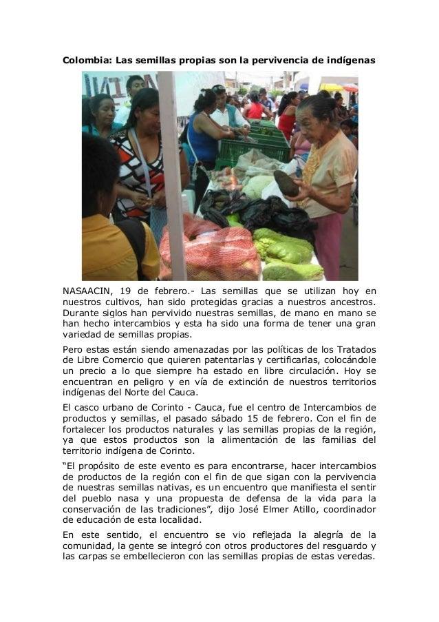 Colombia: Las semillas propias son la pervivencia de indígenas  NASAACIN, 19 de febrero.- Las semillas que se utilizan hoy...