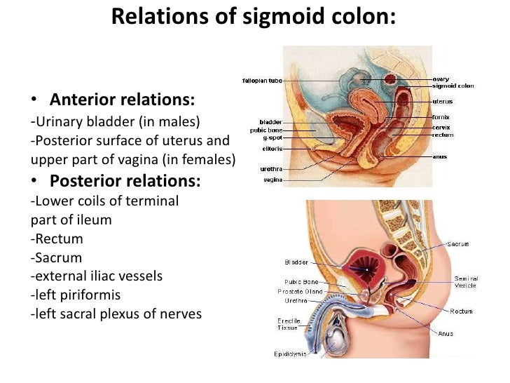 colon, Human Body