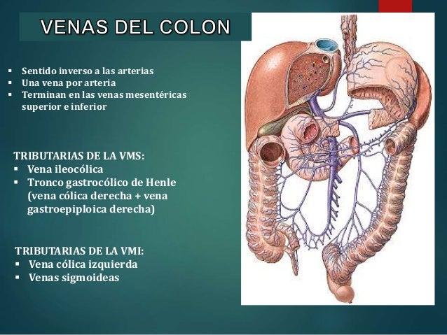 Anatomia Do colon