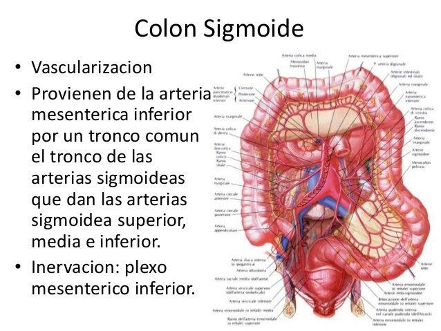 Encantador Anatomía Del Colon Sigmoide Colección de Imágenes ...