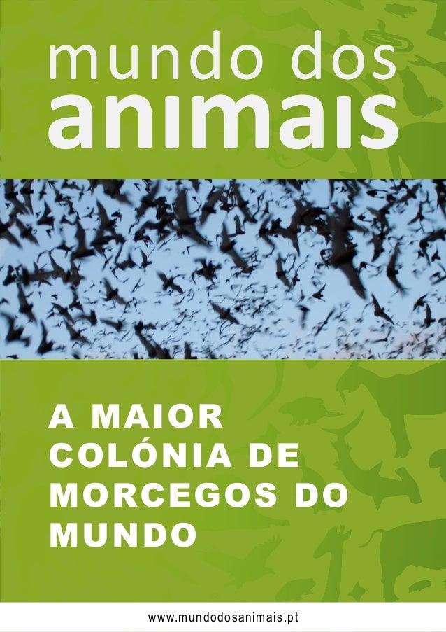 A MAIOR COLÓNIA DE MORCEGOS DO MUNDO www.mundodosanimais.pt