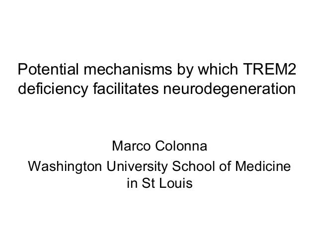 Potential mechanisms by which TREM2 deficiency facilitates neurodegeneration Marco Colonna Washington University School of...