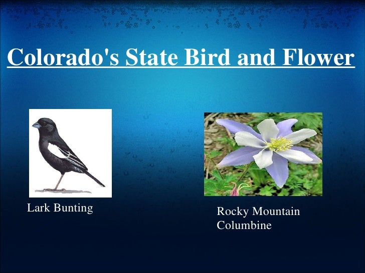 13 colorados state bird and flower