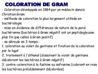 next slideshares - Coloration De Gram Protocole