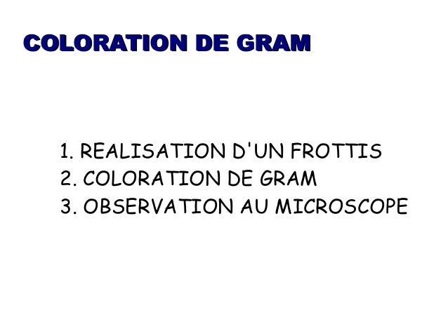 coloration de gram - Coloration Gram