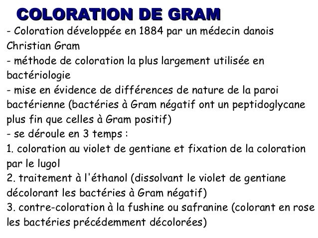 coloration de gram - Coloration Gram Positif