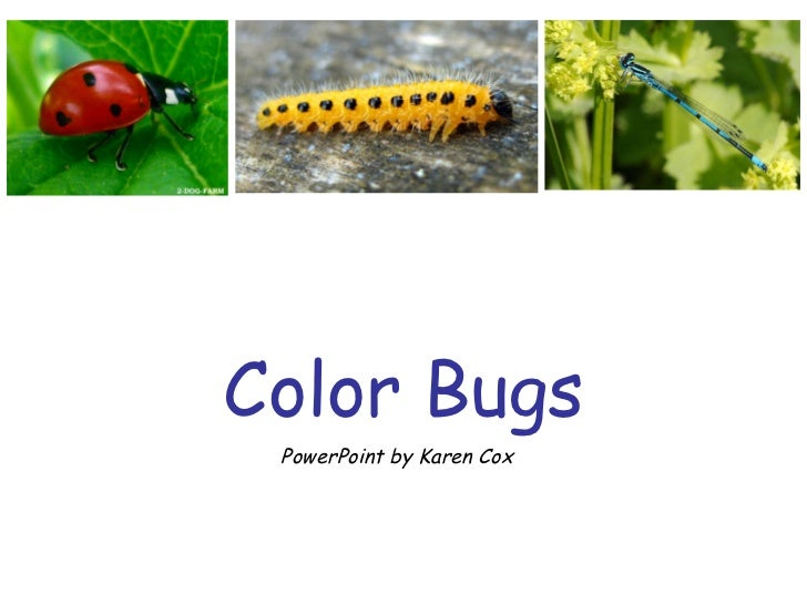 Color Bugs PowerPoint by Karen Cox