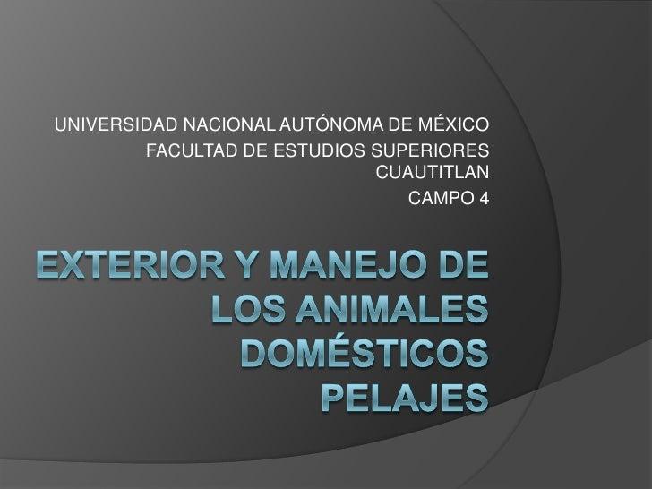 EXTERIOR Y MANEJO DE LOS ANIMALES DOMÉSTICOSPELAJES<br />UNIVERSIDAD NACIONAL AUTÓNOMA DE MÉXICO<br />FACULTAD DE ESTUDIOS...