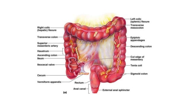 Colorectal carcinoma anatomy to management