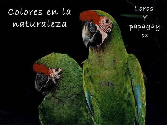LorosColores en la      Y naturaleza     papagay                   os