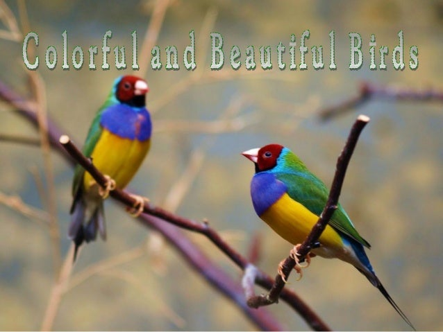 Colorful and beautiful birds