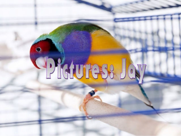 Colorful and beautiful birds Slide 2