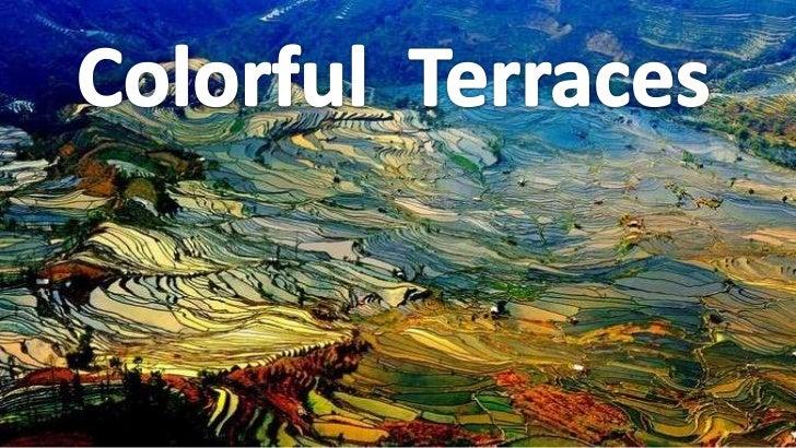 Colorful  terraces