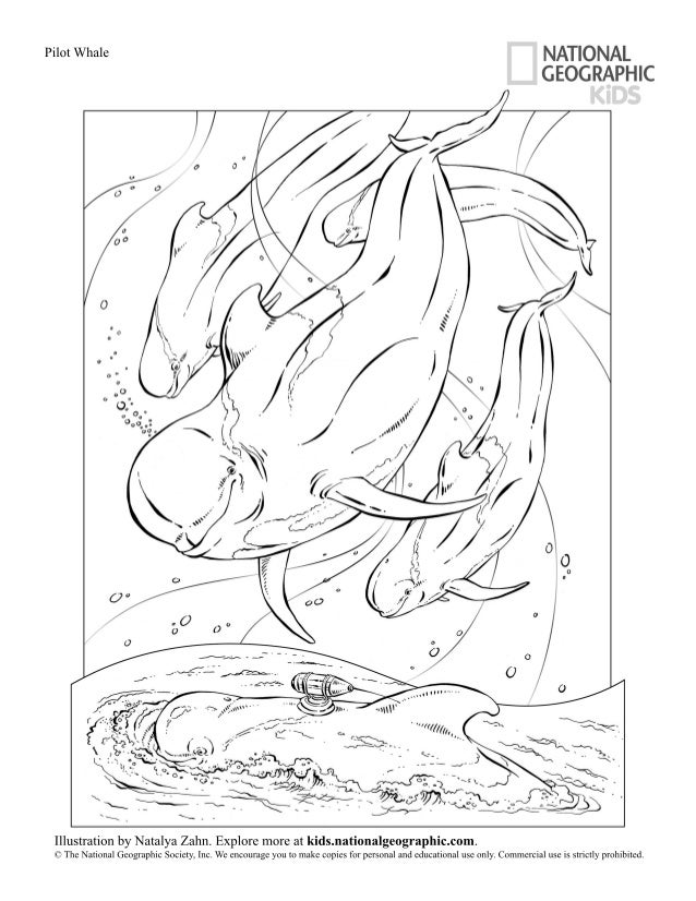 National Geographic Coloring Pages Pdf : Pin by laura peachey on coloring pages