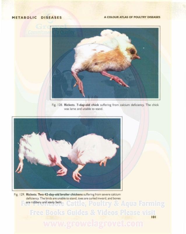 A Colour Atlas of Poultry Diseases.